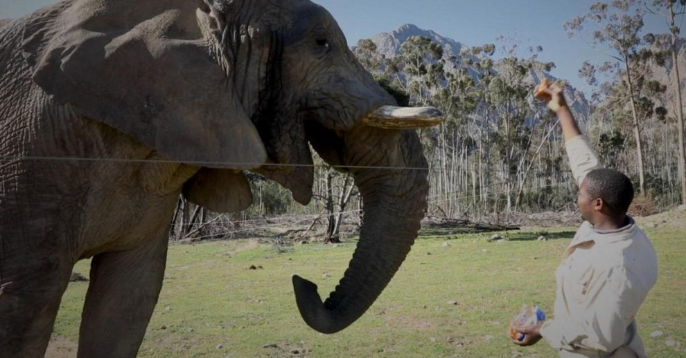 South Africa's Private Game Reserves Are Struggling to Survive Without Tourists. The Animals Are, Too