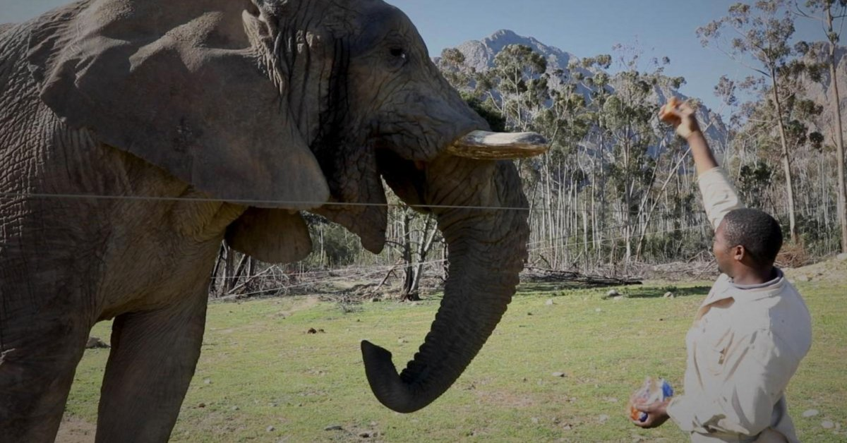 South Africa's Non-public Sport Reserves Are Struggling to Survive With out Vacationers. The Animals Are, Too