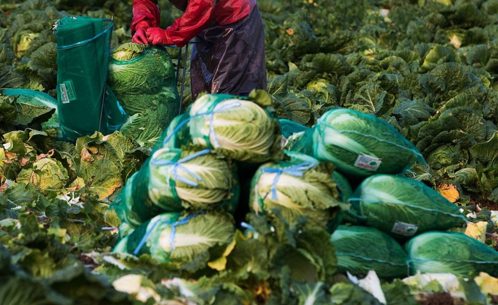 Korea Faces Kimchi Catastrophe After Typhoons Cripple Cabbage Crop