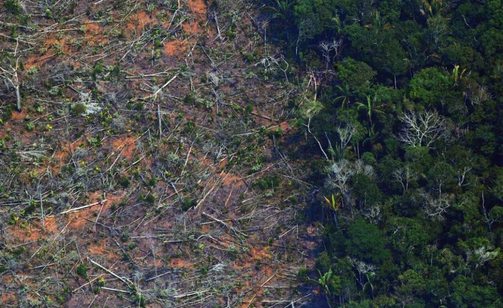 The Amazon Now Emits More Carbon Than it Absorbs. Can We Ever Reverse That Tipping Point?
